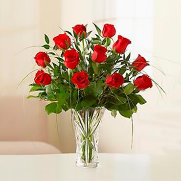 Amazing Roses - CANTAURA