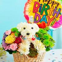 Birthday Puppy - GUATIRE